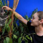Ashleigh Barty,Australia Bushfire,Brisbane International,Australian tennis,Sports Business News